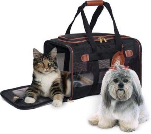 Отправляемся на отдых с домашним животным