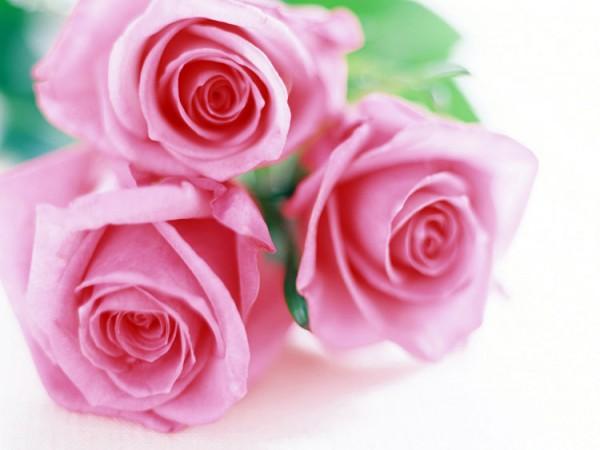 Какие цветы выбрать в подарок для девочек и девушек?