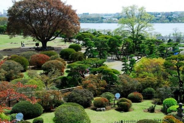 Растения в культуре Японии.